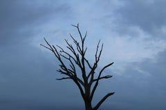 黎明停止的结构树 免版税库存图片