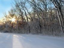 黎明多雪的森林 免版税库存图片