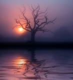 黎明有薄雾的somerset 库存照片