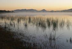 黎明池塘芦苇 库存图片