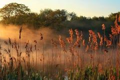 黎明湖有薄雾超出 免版税库存照片