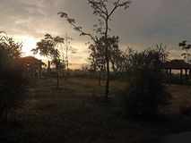 黎明,日出,树,灌木,褐色,天空,草,旅馆,大阳台,早晨,旅途,森林,自然,光,桃红色,假期 库存照片