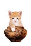 黏土小猫罐红色 免版税图库摄影