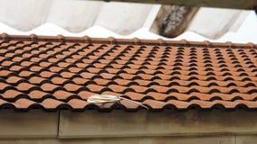 黏土瓦片屋顶板料有在房子安置的有线电视卷 库存照片