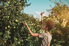 黑人女孩在公园摘从树的苹果 免版税库存图片