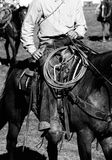 黑人牛仔实际骑马白色 免版税库存图片