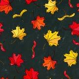 黑人董事会 槭树叶子和种子红色,桔子和黄色的无缝的不尽的样式 现实手拉的优质传染媒介 免版税图库摄影