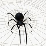 黑人蜘蛛寡妇 免版税库存图片