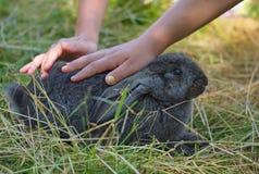 黑兔子手冲程 免版税库存照片