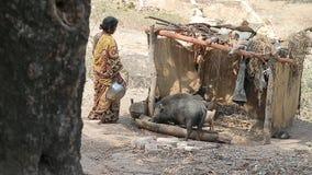 黑公猪喝从一个木饮者的肮脏的水 小屋在印度的密林 股票录像