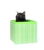 黑匣子猫礼品 免版税库存图片