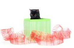 黑匣子猫礼品 库存图片