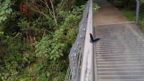 黑和蓝色蝴蝶3 免版税库存照片