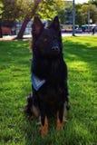 黑坐的狗在布尔诺 库存照片