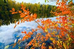 黑堂梨属灌木红色叶子  秋天横向 免版税库存图片