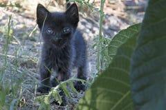 黑小小猫 库存图片