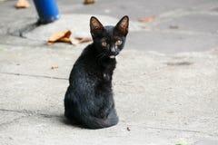 黑小的小猫在一个寺庙居住在泰国 库存图片