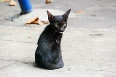 黑小的小猫在一个寺庙居住在泰国 免版税库存照片