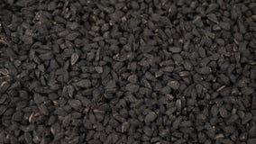 黑小茴香或香芹籽堆转动 影视素材