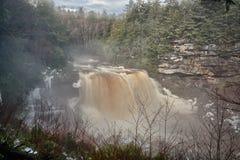 黑尿病在雪的国家公园树 免版税图库摄影