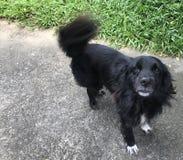 黑微小的狗 免版税库存照片