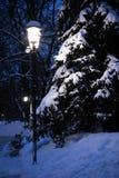 黑暗的冷淡的晚上公园冬天 免版税图库摄影