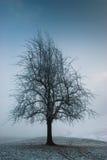黑暗的喜怒无常的结构树 库存照片