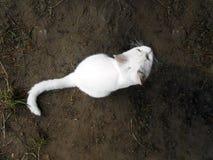 黑暗的地球上的白色猫 免版税库存图片