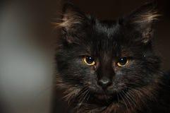 黑暗的小的猫画象  库存图片