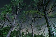 黑暗的木头 库存图片