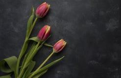 黑暗的桃红色郁金香 库存图片