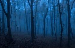 黑暗的森林在晚上 库存图片