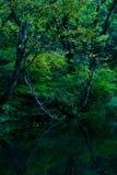 黑暗的森林湖 库存照片