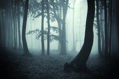 黑暗的森林现出轮廓奇怪的结构树 免版税库存照片