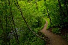 黑暗的森林路径 免版税库存照片