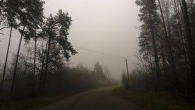 黑暗的森林,路风景雾的在一个黑暗的森林里 免版税库存照片