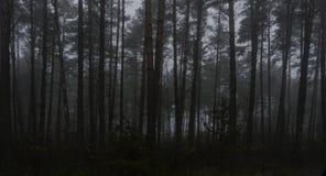 黑暗的森林,路风景雾的在一个黑暗的森林里 库存照片