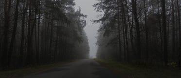 黑暗的森林,路风景雾的在一个黑暗的森林里 免版税库存图片