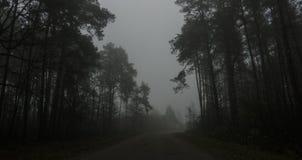 黑暗的森林,路风景雾的在一个黑暗的森林里 免版税图库摄影