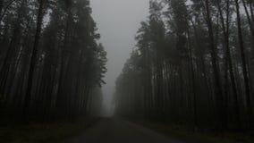 黑暗的森林,路风景雾的在一个黑暗的森林里 图库摄影