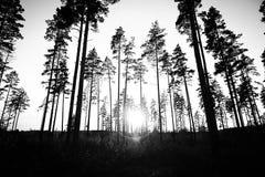 黑暗的森林 免版税库存照片图片