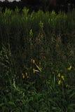 黑暗的植物 库存照片