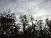黑暗的横向 森林,树,灰色多云天空 免版税库存照片
