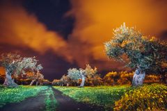 黑暗的橄榄色的庭院 免版税库存图片