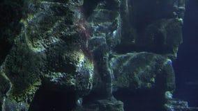 黑暗的水下的岩层 影视素材