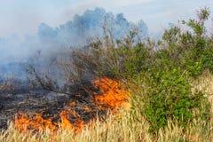 黑暗的烟森林火灾和云彩在杉木的站立 火焰开始损坏树干 免版税库存照片
