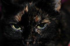 黑暗的猫画象  库存照片