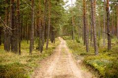 黑暗的神奇森林公路,道路 免版税库存照片