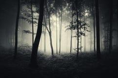 黑暗的神奇森林在万圣夜 免版税库存照片