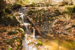 黑暗的空心秋天, Shenandoah国家公园 库存图片
